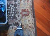 carpet Jan 2010.JPG