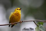 Les oiseaux du Québec - Bird of Québec