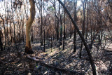 Bushfire aftermath at Palm Beach