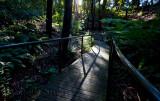Walkway in Botanic Gardens, Canberra