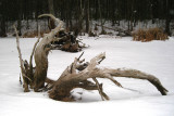 Driftwood on a frozen swamp