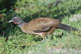 Trinidad & Tobago Birds