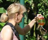 Julie has a hungry Copper-rumped Hummingbird - Amazilia tobaci