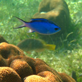 Yucatan Underwater Pictures