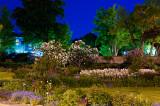 Maplelawn by Night
