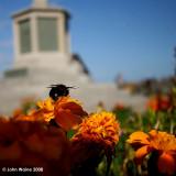 Municipal Bee