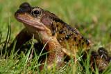 Frog Foto (Best Viewed At Original Size)