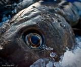 Eye Cod