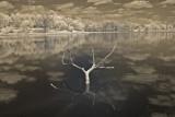 Driftwood Excaliber  0099.jpg