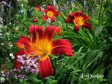 Garden Variety:  Flowers & More
