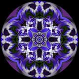 410 Blue Daisy Kaleidoscope