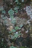 Tree Bark 6.