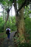 Tramping in Smiths Bush.
