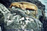 Galapagos , Equador , 2001