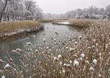 138, Marsh, Rye