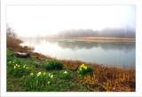49 Morning Fog, Rye