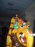 Vijaya Ragavan_Yali Vahanam_5th Day Night.jpg