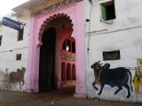 02-gOshala in Nathdwaraka1.JPG