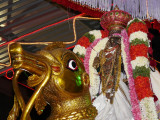 17 3rd day evening Hamsa vahanam purappadu.JPG