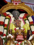 09 5th evening Hanumantha vahanam.JPG