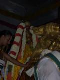 Sri PerarulalaN_Yali Vahanam5.jpg
