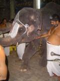 19-Sriperumbudur Samprokshanam 2008.Anguraarpanam Purappaadu.Temple Elephant doing mangalasasanam to Perumal & Swami.JPG