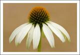 Yellow Spiky