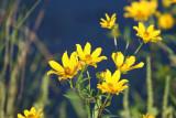 Wildflowers by the marsh