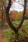 The Y Tree