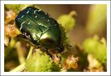 Beetle Breakfast