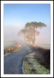 Misty morning in Wales