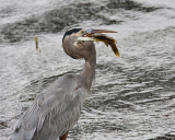 Fish Snack