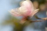 Breezy Magnolia