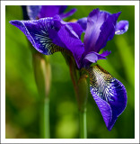 Iris - Clear for Landing