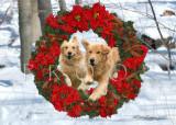 Cole Special Wreath composite