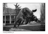 The Naval Academy Mascott (Billy Goat)