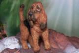 Bloodhound (SOLD)