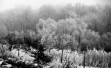 Frozen Fog Landscape