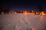 Moonlit Tracks in the Snow