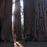 sequoia01.jpg