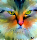 Chat, beaucoup de couleurs by VeeH - May, 2010