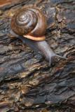 Soggy Snail