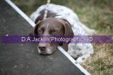 Brocklesby Hunter Trials - Pony Club       March 21st  2008