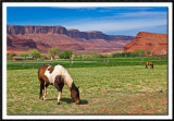 Castle Valley Horses