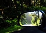 driving through wood