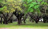 mossy plantation