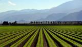farm in Palm Springs