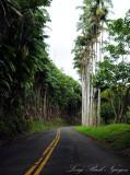 Alexander palms drive