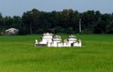 family plot in rice field
