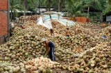 coconut farmers